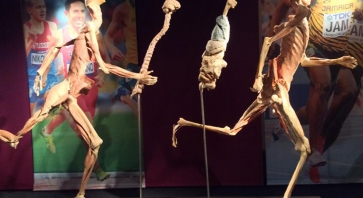 Real bodies a milano for Mostra anatomica milano